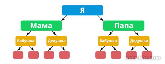 Генеалогическое дерево в Фотошопе